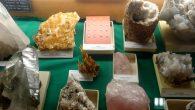 Venegono Museo Naturale