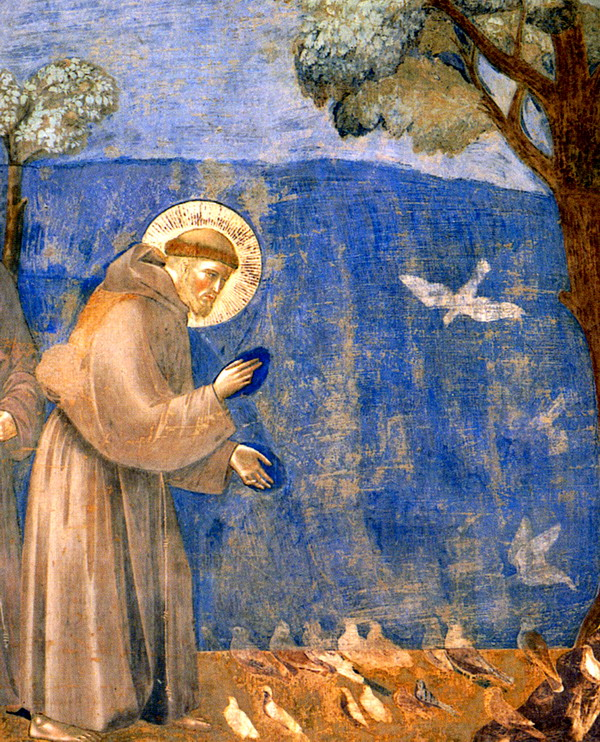 San Francesco Giotto predica uccelli Assisi