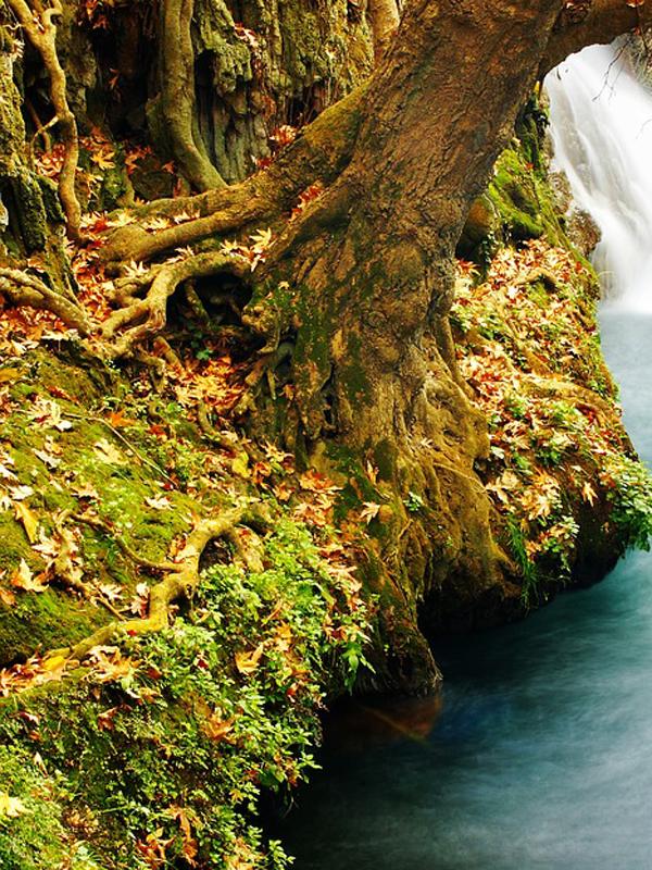 natura paesaggio autunno radice albero