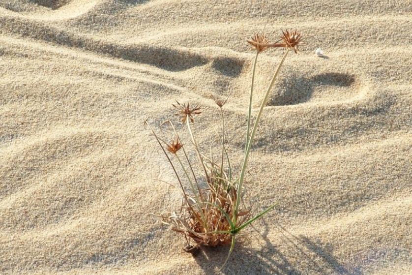deserto fiorito Cropped