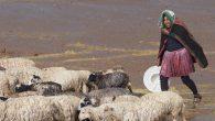 Un pascolo sull'altopiano boliviano